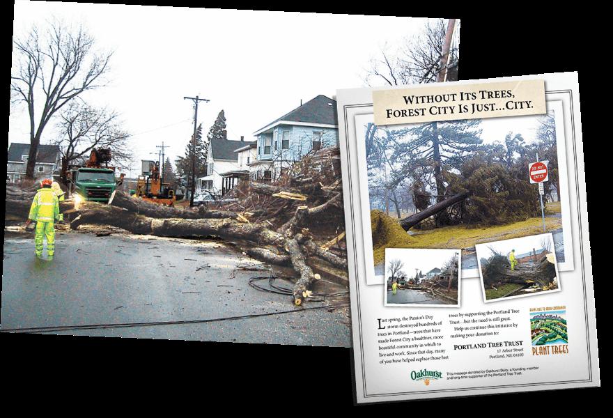 https://www.oakhurstdairy.com/wp-content/uploads/2021/02/milestone-1993-trees@2x.png